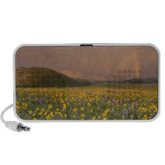 Spectacular wildflower meadow at sunrise in notebook speakers