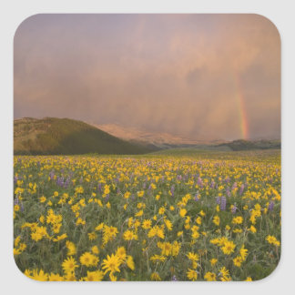 Spectacular wildflower meadow at sunrise in square sticker