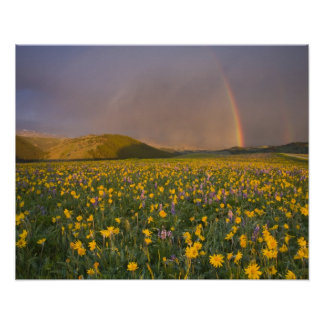 Spectacular wildflower meadow at sunrise in the 2 poster