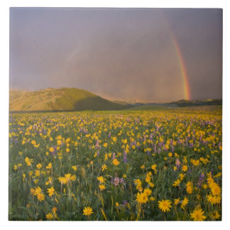 Spectacular wildflower meadow at sunrise in the 2 tile
