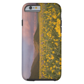 Spectacular wildflower meadow at sunrise in the tough iPhone 6 case