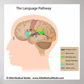 Speech centers of the brain diagram. poster
