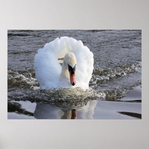 Speeding Swan Print