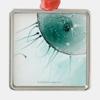 Sperm Fertilising an Ovum. Square Metal Christmas Ornament