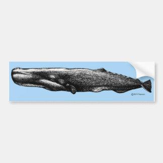 Sperm Whale Bumper Sticker Car Bumper Sticker