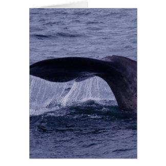 Sperm Whale Diving Card