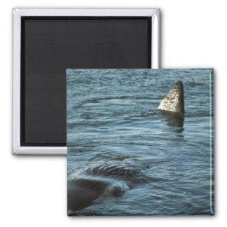 Sperm Whale Magnet