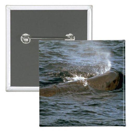 Sperm whale pinback button