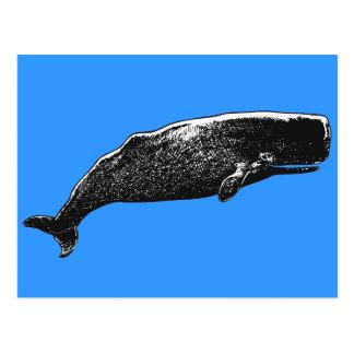 Sperm Whale Postcards