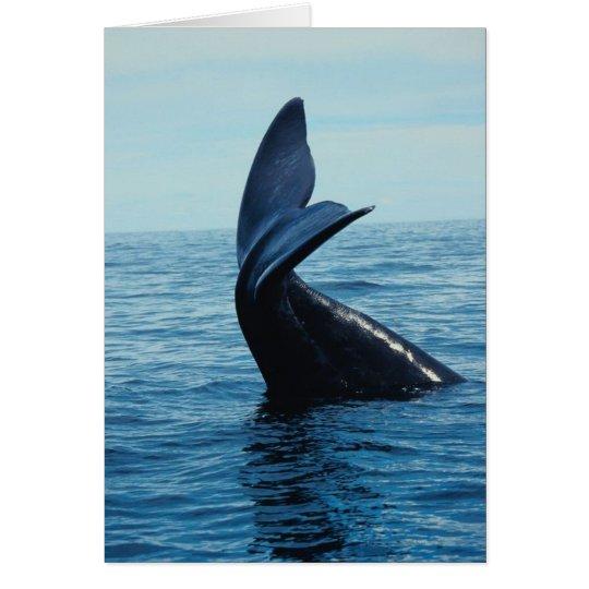 Sperm Whale Tail Card