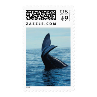 Sperm Whale Tail Stamps