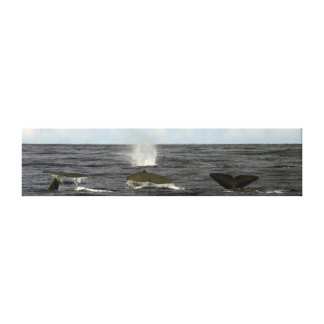Sperm whales in the Azores Canvas Print