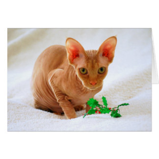 Sphinx Cat Holly Merry Christmas Greeting Card