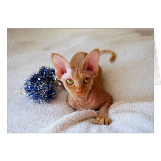 Sphinx Cat With Blue Tinsel Card
