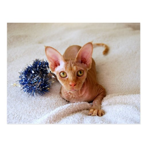 Sphinx Cat with Blue Tinsel Post Card