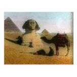 Sphnix and Pyramid Postcard