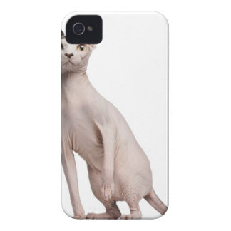 Sphynx (13 meses) iPhone 4 Case-Mate carcasas