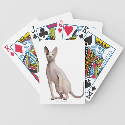 Sphynx (13 months old) bicycle playing cards