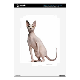 Sphynx (13 months old) decal for iPad 3