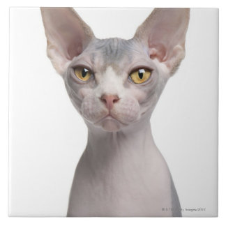 Sphynx (7 months old) ceramic tile