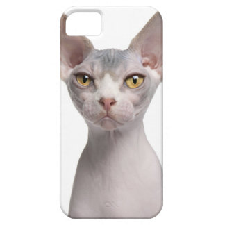 Sphynx (7 months old) iPhone SE/5/5s case