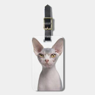 Sphynx (7 months old) luggage tag