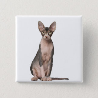 Sphynx (7 months old) sitting button