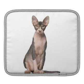 Sphynx (7 months old) sitting sleeve for iPads
