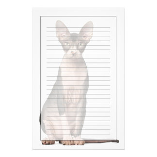 Sphynx (7 months old) sitting stationery
