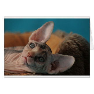 Sphynx Greeting Cards