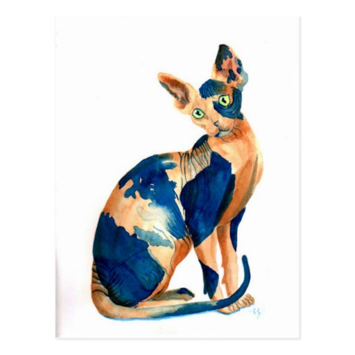 Sphynx Cat 6 Post Card