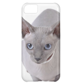 Sphynx cat cover for iPhone 5C