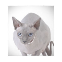 Sphynx cat notepad