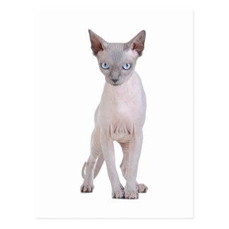 Sphynx cat postcards