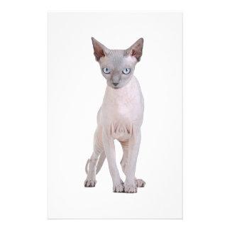 Sphynx cat stationery