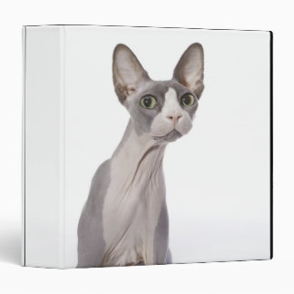 Sphynx Cat with surprised expression 3 Ring Binder