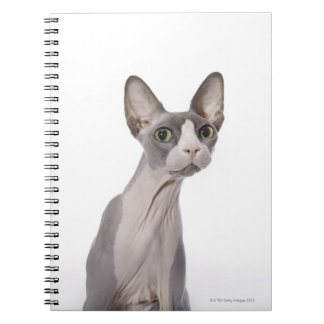 Sphynx Cat with surprised expression Notebook