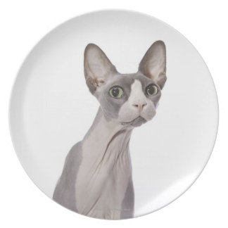 Sphynx Cat with surprised expression Plate