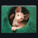 "Sphynx Cats Wall Calendar | GoSphynx.com<br><div class=""desc"">Sphynx Cats Wall Calendar. Designed by GoSphynx.com</div>"