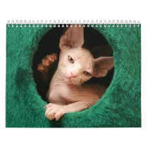 Sphynx Cats Wall Calendar | GoSphynx.com