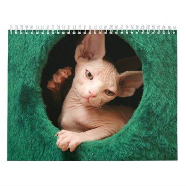 GoSphynx Sphynx Cats Wall Calendar | GoSphynx.com