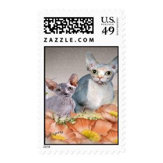 Sphynx kitten Postage Stamps
