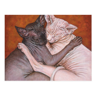 Sphynx Sphinx Cat Cats Nap Time Postcard
