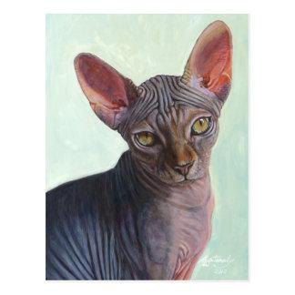 Sphynx Sphinx Cat Cats Sunitha Postcard