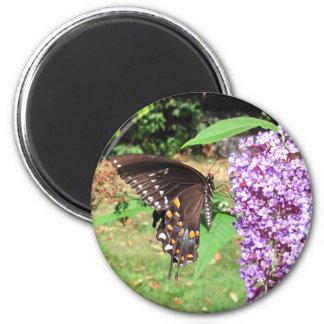 Spicebush butterfly ~ magnet