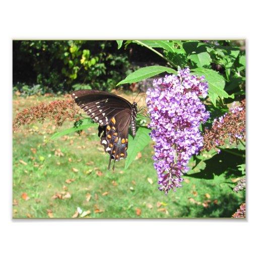 Spicebush Butterfly ~ Photo