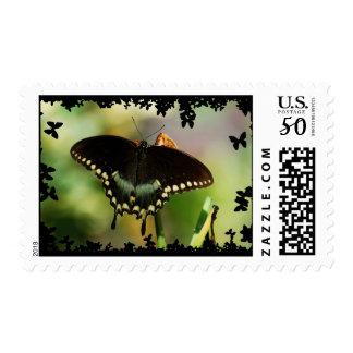 Spicebush Swallow Tail DSC_0119 Postage