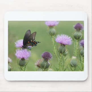 Spicebush Swallowtail Butterfly - Papilio troilus Mouse Pad
