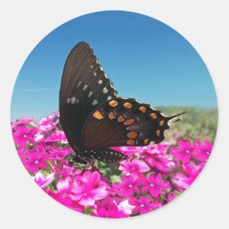 Spicebush Swallowtail Butterfly Stickers