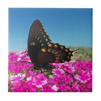 Spicebush Swallowtail Butterfly Tile
